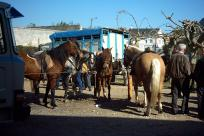 Feria de San Rosendo